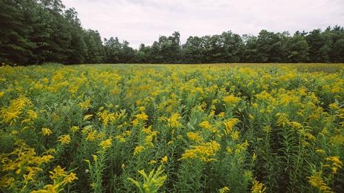 Rennie Farm field of flowers