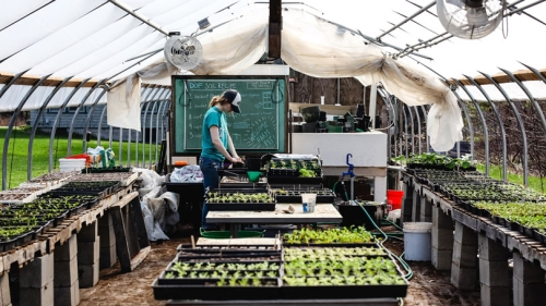 Seedlings being tended at the Organic Farm