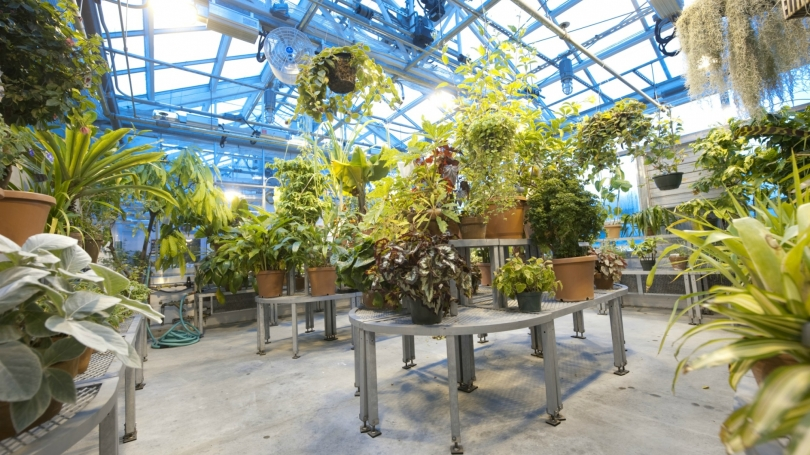 LSC greenhouse